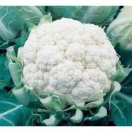 Насіння капусти кольоровий Сніжинка (Італія), 250 насінин