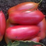 Семена томата Розовая Сосулька, 50г