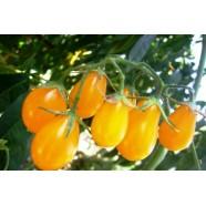 Насіння томату Золота Крапля, 50г