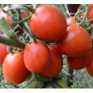 Семена томата инкрустированный Рио Гранде (Германия), 1г