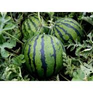 Семена арбуза Сладкий Бриллиант (Россия), 0,5кг