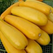 Насіння цукіні Жовтоплідний F1, (Росія), 0,5 кг