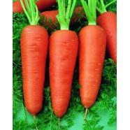 Семена моркови Шантанель, (Германия), 0.5кг