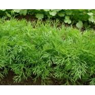 Семена Укропа Ажур, (Россия), 0,4кг