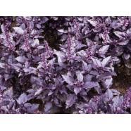 Насіння Базиліка Карамельний (фіолетовий), (Польща), 0,2 кг