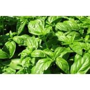 Базилик Зеленый ароматный,  0,2 кг