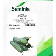 Семена огурца СВ 4097 F1, 250шт.