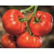 Насіння томату Біг Біф F1, 100шт.