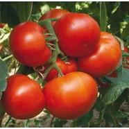 Насіння томату Фантастина F1, 500 шт.