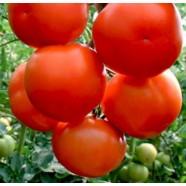 Семена томата Лилос F1, 100шт.