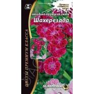 Насіння квітів Гвоздика Турецька Шахерезада Суміш 0,2 г