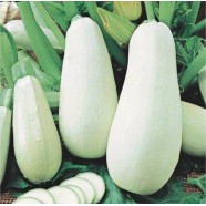 Семена кабачка Белогор F1, 1г