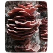 Мицелий гриба Вешенка розовая, 10г