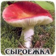 Мицелий гриба Сыроежка, 10 г