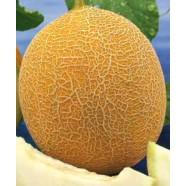 Семена дыни Титовка, 0,5кг