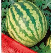 Семена арбуза Таврийский, 0,5кг