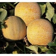 Семена дыни Колхозница, 0,5кг