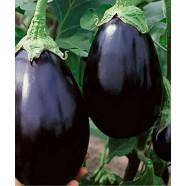 Насіння баклажана Чорний Красень, 0,5 кг