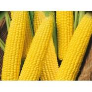 Насіння кукурудзи Делікатесна, 100г
