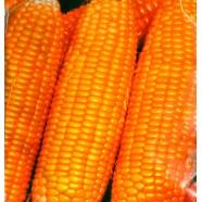 Насіння кукурудзи Лакомка, 100г