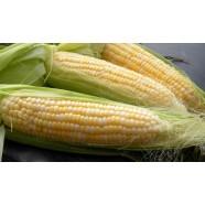 Насіння кукурудзи Цукрова, 100г