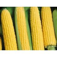 Насіння кукурудзи Брусниця, 100г