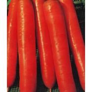 Насіння моркви Амстердамська, 100г
