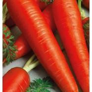 Насіння моркви Віта Лонга, 1 кг