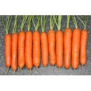 Насіння моркви Нантська, 1кг