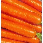 Насіння моркви Осінній Король, 1 кг