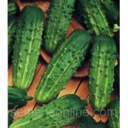 Семена огурца Засолочный, 100г
