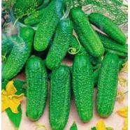 Семена огурца Ребятки с Грядки F1, 0,5 кг