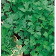 Насіння петрушки Гігант Італії листова, 100г