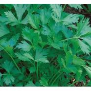 Насіння петрушки Богатир листова, 0,5 кг