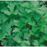 Насіння петрушки Карнавал листова, 100г