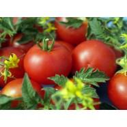 Семена томата Джина, 0,5кг