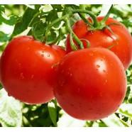 Семена томата Загадка, 0,5кг