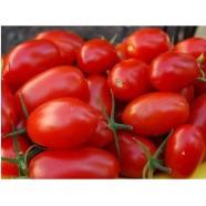 Семена томата Лампо, 0,5кг