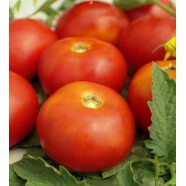 Семена томата Солярис, 0,5кг