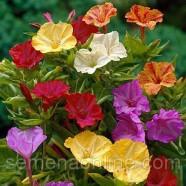 Семена цветов Мирабилис смесь, 50г