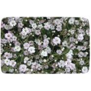 Насіння квітів Гіпсофіла Біла, 0,5 р.