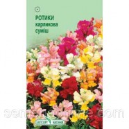 Семена цветов Львиный зев (Ротики) карликовые, 0,2г.