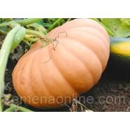 Семена тыквы Мускатная Витаминная, 0,5кг
