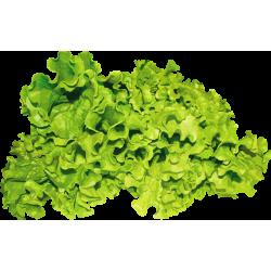 Профессиональные семена салата, зелени, пряных трав в банках