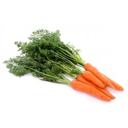 Насіння Моркви в професійній упаковці