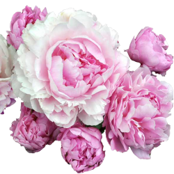 Насіння Квітів у професійній упаковці
