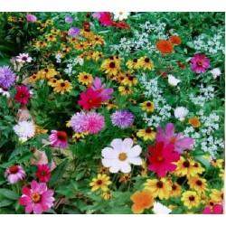 Семена смеси Полевых и Балконных цветов