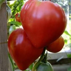 Семена томата Бычье Сердце красное, 100г