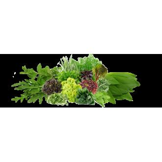 Семена Салата, Зелени, Пряных Трав в мелкой фасовке