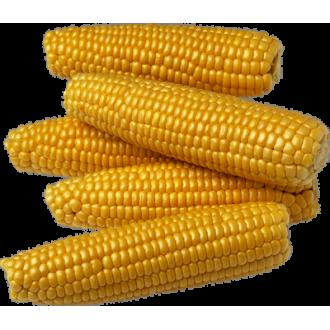 Насіння Кукурудзи в професійній упаковці